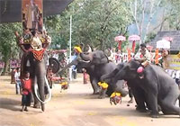 Thai elephants presided over the opening ceremony of the great legend