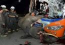 วินาทีชีวิต เกิดเหตุรถบัสโดยสาร ชนช้างพลาย ล้ม บริเวณถนนห้างฉัตร จ.ลำปาง